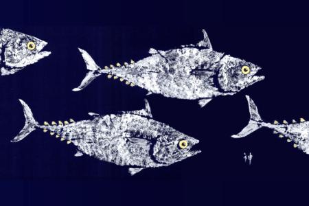 School-of-Tuna