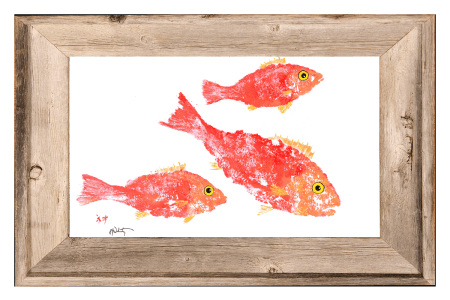 coral snapper - framed